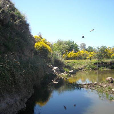 Aves y mucho verde en las márgenes de los arroyos de Villa Ventana