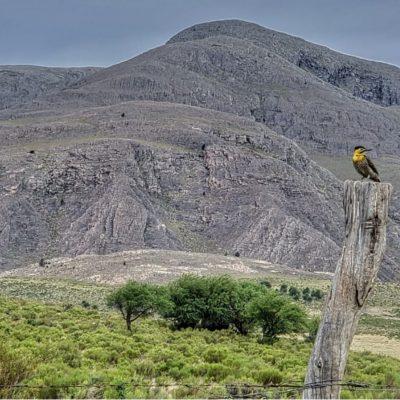 La fauna en la Villa es de destacarse figurando entre los ejemplares de aves el carpitero como uno de los más bonitos