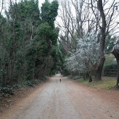 Las caminatas por las calles de Villa Ventana son inolvidables