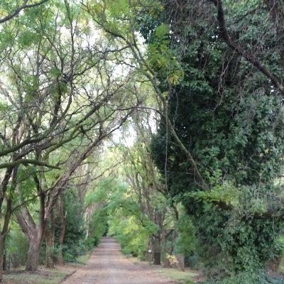 La naturaleza se abre paso por las copas de los árboles. Digno de verse