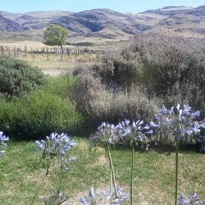 paisaje serrano con flores agapantus en primer plano