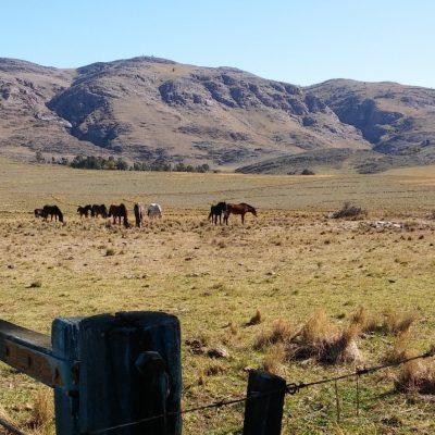 Desde la cabaña es normal ver ganado vacuno, mulas o equinos pastando con el fondo de las sierras